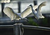 獵鳥篇210801(1):bird_CFJ8327 (11).jpg