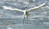 獵鳥篇210801(1):bird_CFJ8361.jpg