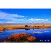 新疆之旅--巴音布魯克--天鵝湖:相簿封面