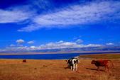 新疆之旅--塞里木湖:IMG_0150.JPG