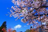 2012迷戀阿里山鐵道櫻花:IMG_7332.JPG