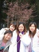 2005二技畢旅-阿里山賞櫻:2005二技畢旅 012