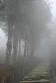 太平山外拍:DSC_0008.jpg