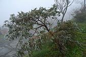 太平山外拍:DSC_0019.jpg