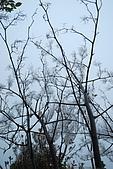 太平山外拍:DSC_0022.jpg