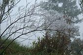 太平山外拍:DSC_0025.jpg
