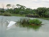 八德埤塘生態園區:圖片3.jpg