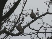 普羅旺斯玫瑰莊園:楊梅森林鳥花園