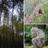 八仙山森林遊樂區:相簿封面