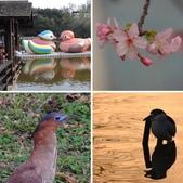 新竹公園 2014:相簿封面