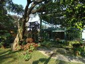 新社(黃金楓)  東豐綠色走廊:新社千樺庭園咖啡