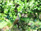 台北植物園的小動物:植物園的小動物