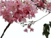 普羅旺斯玫瑰莊園:新埔 普羅旺斯玫瑰莊園