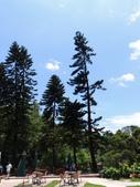 森林鳥花園:森林鳥花園
