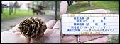 96/05/21_北海道DAY1:R0012967-all