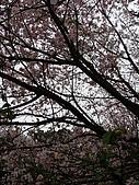 淡水天元宮_20090312:090312_18.JPG