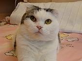 私の猫(一):DSC00018.JPG