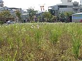 2009 寒假~宜蘭:090204-15.JPG