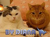 私の猫(一):DSC00025.jpg