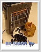私の猫(一):DSC00044.jpg