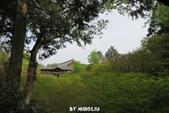 20160409~東福寺+東寺(夜晚點燈):20160409_003.JPG