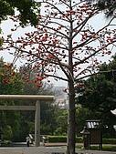 20090321~苗栗通宵神社:090321_R23.JPG