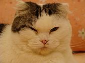 私の猫(一):DSC00022.JPG