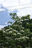 20090423~三峽 北108 紫微路:090423_21.JPG