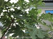20120714~日本之旅第四天:20120714日本_022.JPG
