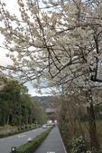 20160319~京都東山花燈路:20160319_005.JPG