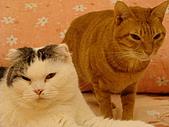 私の猫(一):DSC00023.JPG