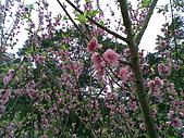 三峽白雞行天宮:2009030710300201