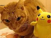 私の猫(一):DSC00032.JPG