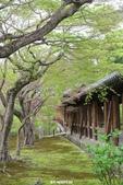 20160409~東福寺+東寺(夜晚點燈):20160409_019.JPG