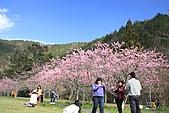 02/26/11 飛奔武陵賞櫻趣:20110226武陵賞櫻去 (16).jpg