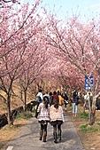 02/26/11 飛奔武陵賞櫻趣:20110226武陵賞櫻去 (47).jpg