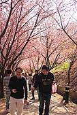 02/26/11 飛奔武陵賞櫻趣:20110226武陵賞櫻去 (48).jpg