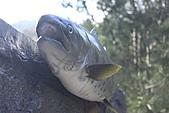 02/26/11 飛奔武陵賞櫻趣:20110226武陵賞櫻去 (50)是標本 沒看到這麼大的本尊.jpg