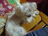 寵物小乖:tn_IMGP0157