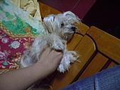 寵物小乖:tn_IMGP0166