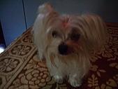 寵物小乖:tn_IMGP0173