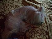 寵物小乖:tn_IMGP0174