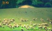 鳳中傳奇*二*:綿羊風景.jpg