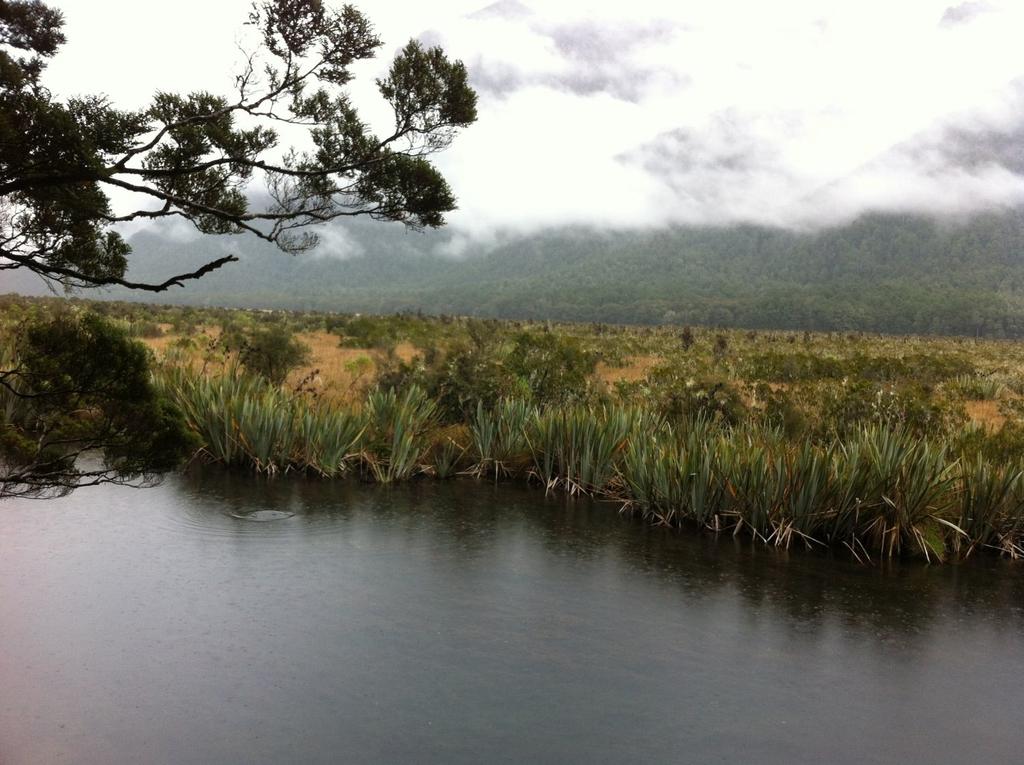 IMG_9015.JPG - 紐西蘭