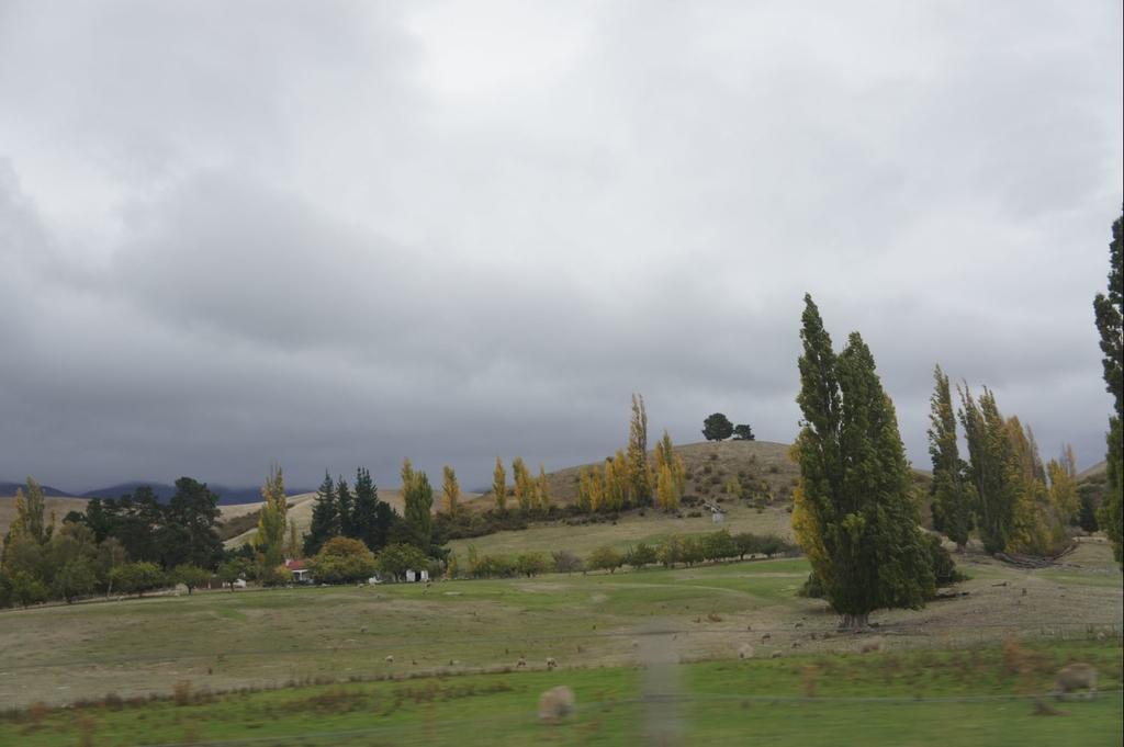 DSC01362.JPG - 紐西蘭