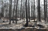 黑部立山旅景:黑森林