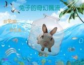 笑笑兔:兔子的奇幻飄流.1.jpg
