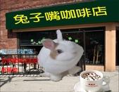 笑笑兔:兔子咖啡店.jpg