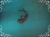敏敏的生活點滴 1:新濠天地美人魚水幕秀