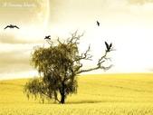 風景圖:風景164.jpg